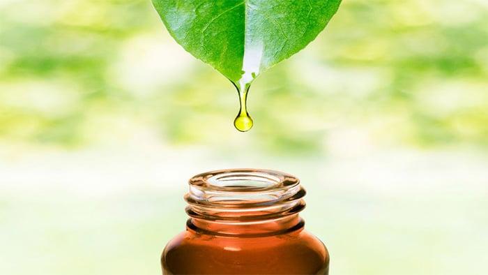 درمان گیاهی کیست مویی با روغن درخت چای